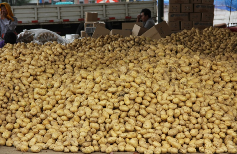 Chinese fresh potato importers in dubai