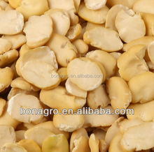 split faba bean