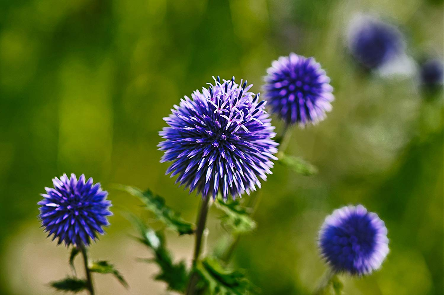 Buy Natural Blue Flower Paper Print Exotic Professional Photography Print Nature Wallpaper Professional Prints Beautiful Flower Photography In Cheap Price On Alibaba Com