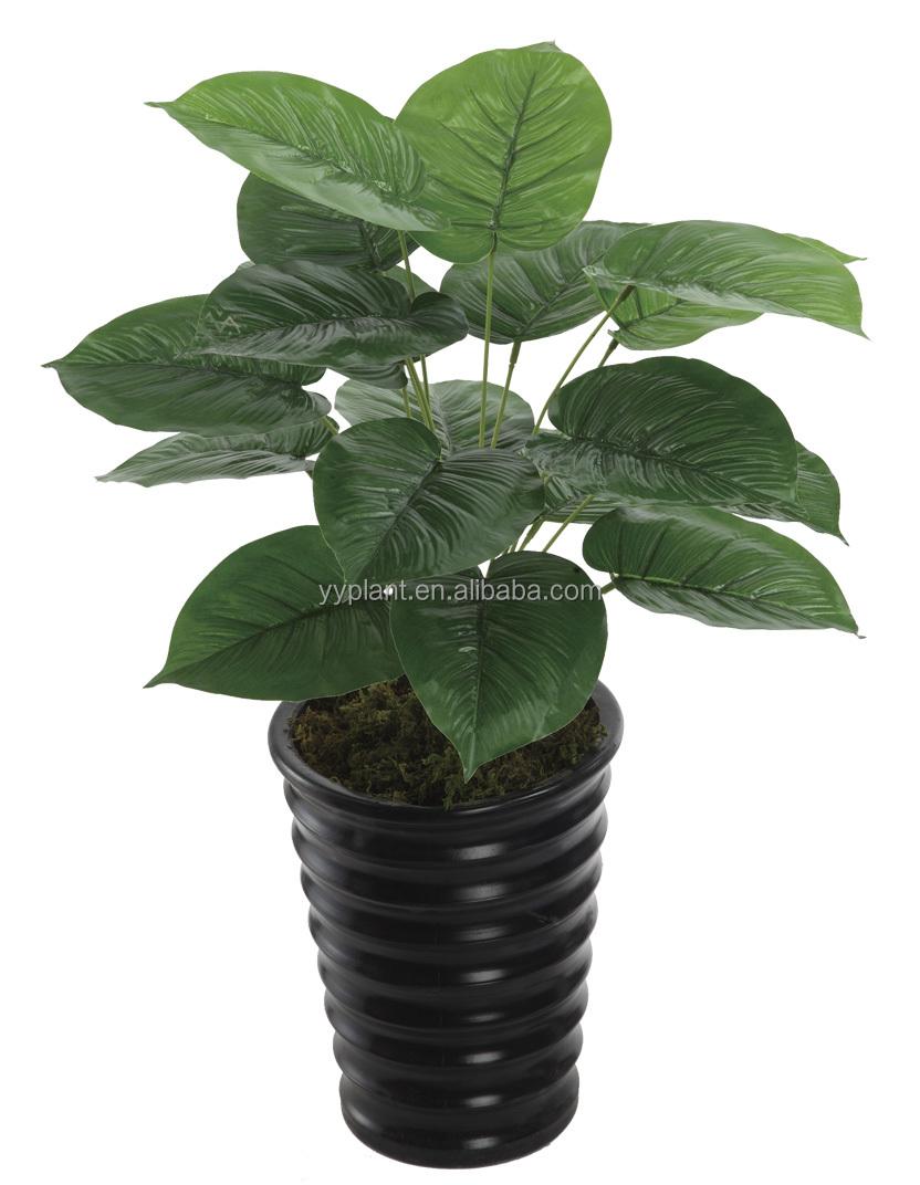 Venta al por mayor arboles de jardin de hoja perenne for Arboles de jardin de hoja perenne