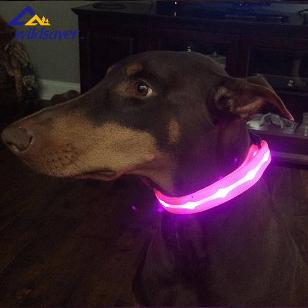 Nylon webbing flash LED dog collar & leash