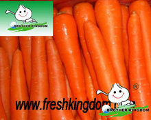 Shandong Fresh Red Carrot,Baby carrot,carrot seed