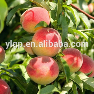 fresh peach from china