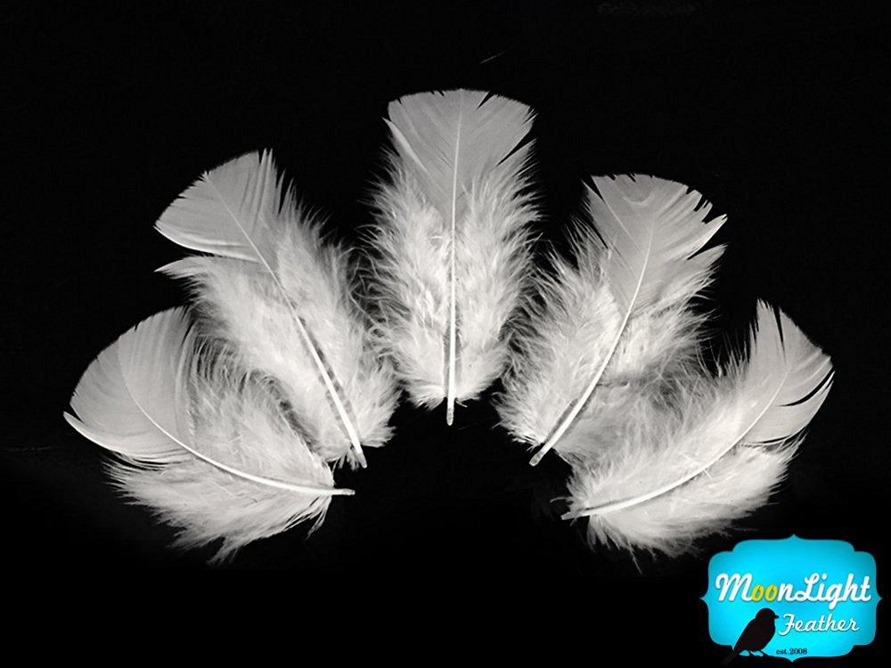 Turkey Feathers, Turkey Plumage - 0.50 Oz. - White Turkey T-base Plumage Feathers