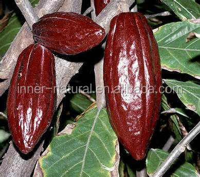 semilla de coca