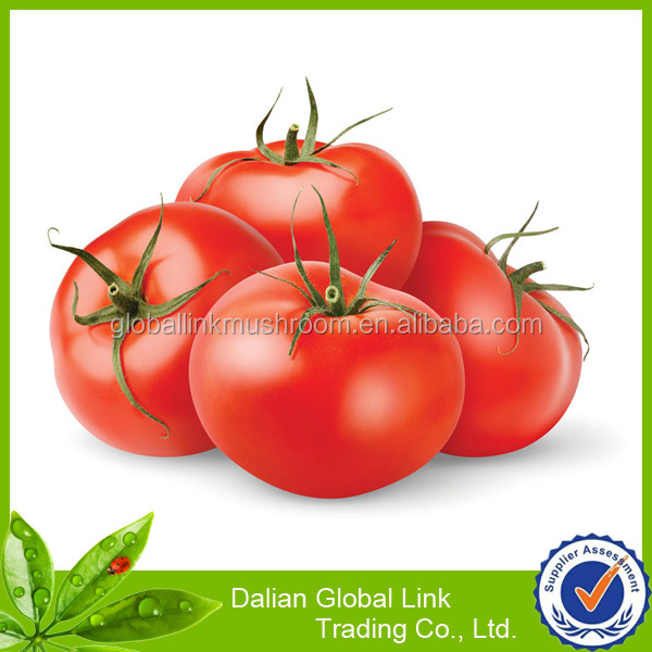 tomato paste factory canned vegetable factory