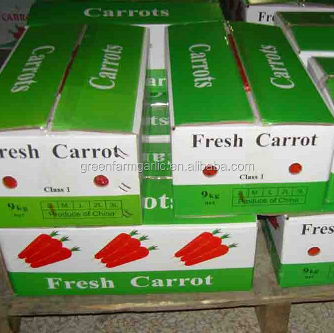 new fresh carrot supplier from China