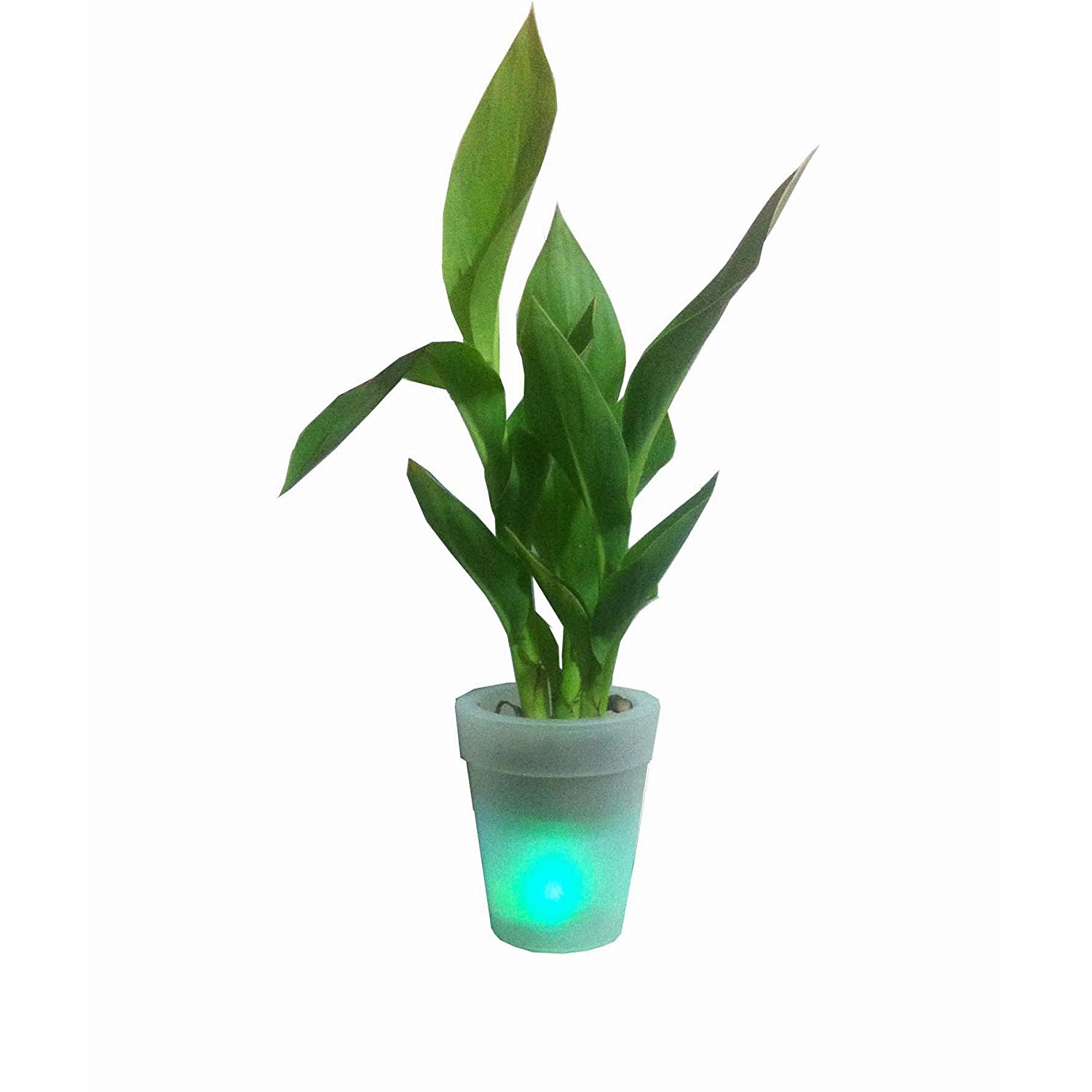 Cheap New Led Solar Vase Find New Led Solar Vase Deals On Line At