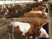 cattle feeds bulk feeds feed additive