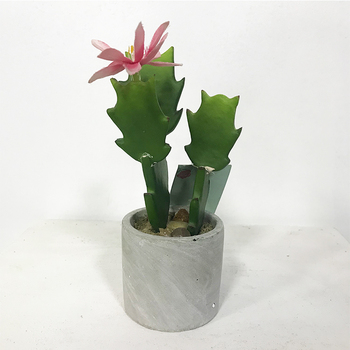Buatan Faux Mini Plastik Kaktus Dengan Pot Semen Silinder Untuk Indoorr Dekoratif Mini Buatan Kaktus Bonsai Dengan Bunga Buy Buatan Kaktus Semen Pot