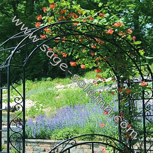 Artistico Decorativo Hierro Jardin Con Arco De La Puerta Para La - Arcos-de-jardin