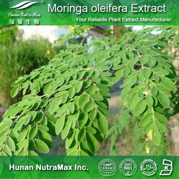Wholesale Moringa Tree Leaf Powder Suppliers