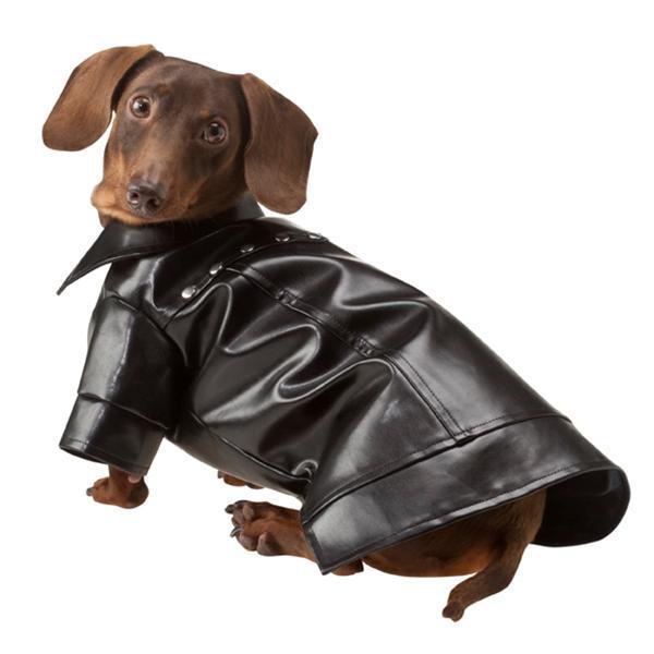 Cuero Chaqueta Buy Botones Para Perros De Comprar 1OPdq1