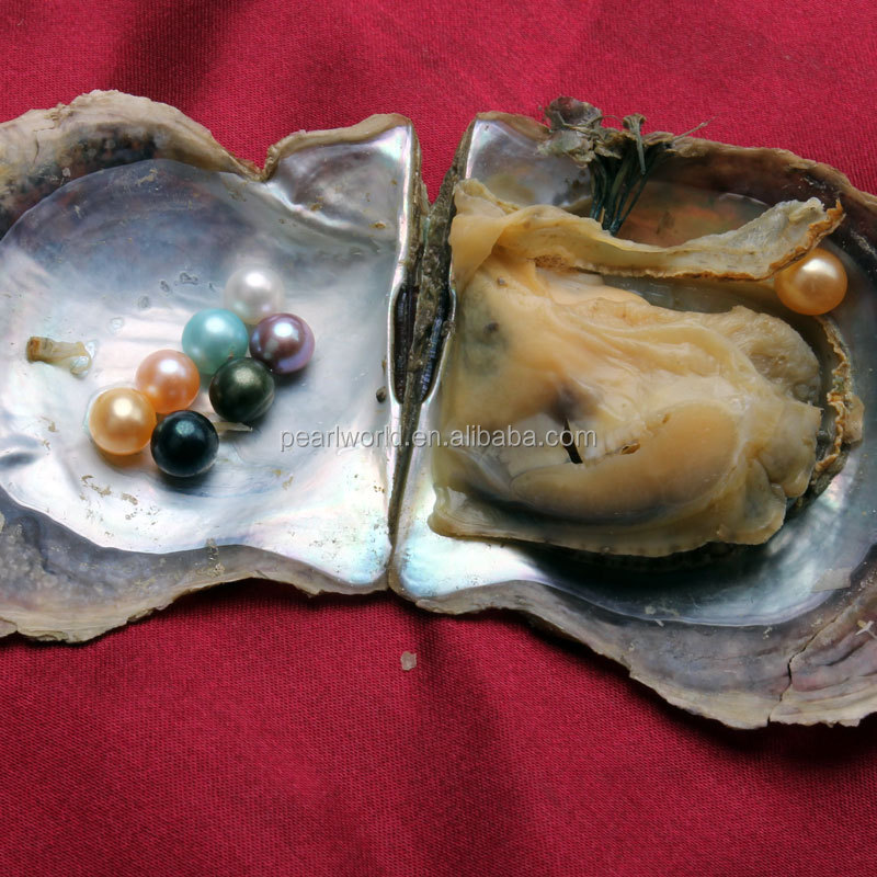 FEIRUN 7-7.5mm colorful one piece pearl inside oyster with pearls, fresh pearl oyster, real oyster