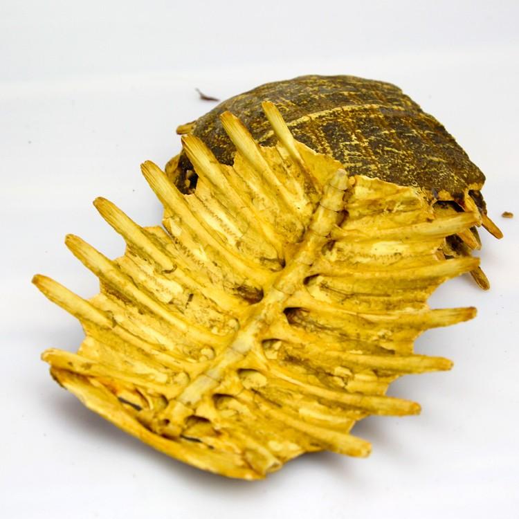 10022 Biejia Best Selling Vinegar Turtle Shell - Buy Vinegar Turtle  Shell,Natural Turtle Shell,Raw Shell Product on Alibaba com