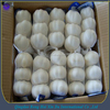 garlic in China export mesh bag or carton packing garlic for russia