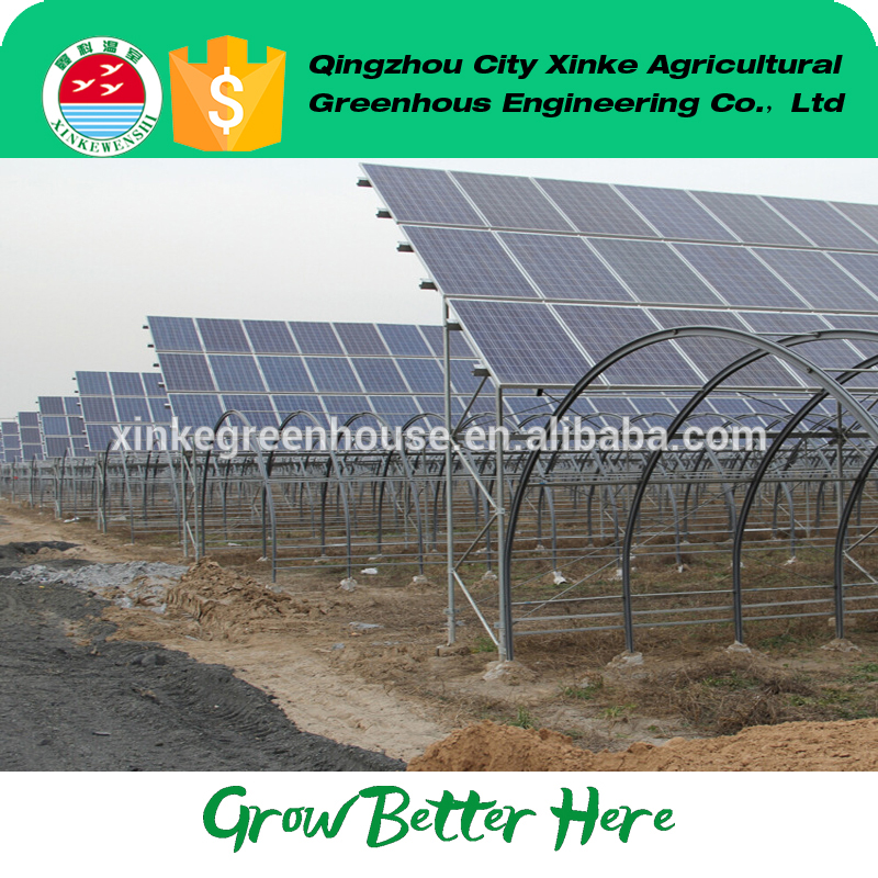 Professional vegetable production solar energy greenhouses china OEM