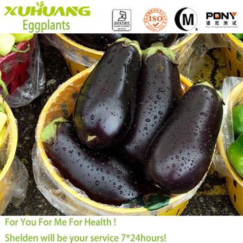 Kosher/Halal/ ISO Certificate organic eggplant extract