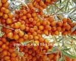 manufacture direct supply high quality Hippophae(P)--Huir