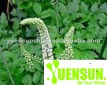 Black Cohosh Extract - Triterpene glycosides > 2.5% by HPLC
