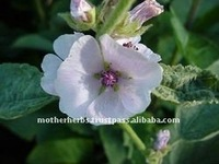 Natural Althaea Officinalis