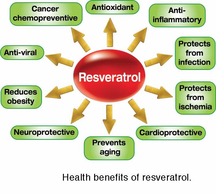 SOST Organic Pure Trans Resveratrol 99% 98% Powder