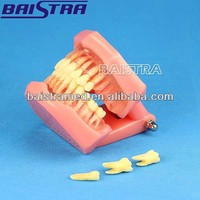 Hot Selling Teeth Model / Dental Plastic Removable Teaching Use Human Teeth Model with CE