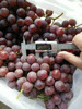 Fresh Grapes Price