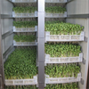 Barley Grass forage equipment / hydroponic green forage growing equipment for animal feed