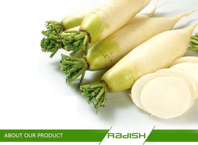 Original fresh white radish