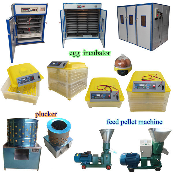 Chinese Incubators Electric Chicken Egg Incubator For Spain ...