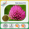 Red clover extract biochanin a,red clover extract powder isoflavone, red clover extract 20% biochanins