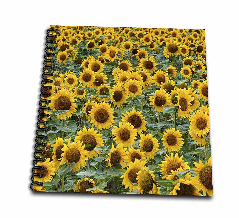 3dRose Danita Delimont - Flowers - Sunflowers in the flower farm, Furano, Hokkaido Prefecture, Japan - Memory Book 12 x 12 inch (db_276891_2)