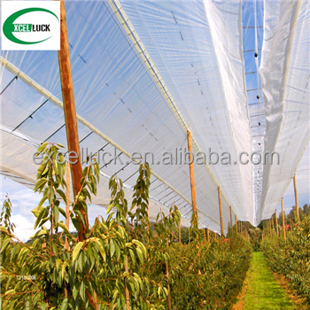 factory supply anti hail netting for agriculture/ hdpe anti hail net for apple tree/white anti hail netting