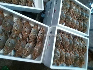 wholesale frozen crab female three spotted crab