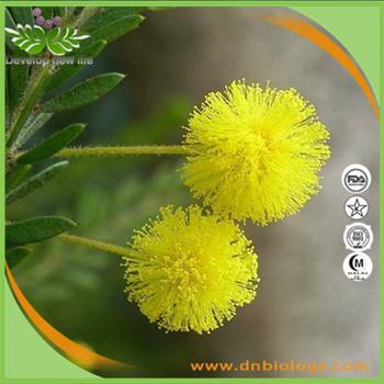 100 High Quality Acacia Rigidula Powder Extractacacia Rigidula