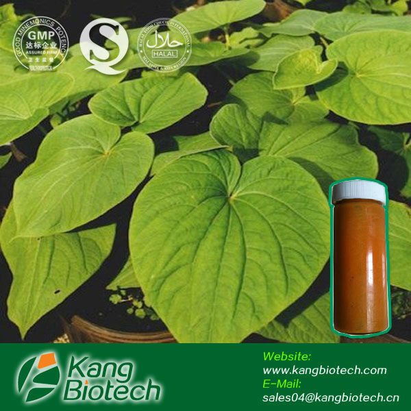 Kavalactones 30% Kava Kava Root Extract - KANG Supplier