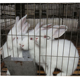 China factory Rabbit Cage For Kenya Farm