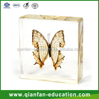 Butterfly plastic diy materials for kids toys real insect