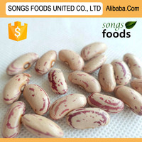 Pinto Beans or Sugar Beans Heilongjiang Origin
