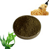 kelp dietary fiber nutrition supplement food additive for noodle