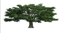 Guangzhou Shengjie 5-50m artificial oak tree favorable date palm prices