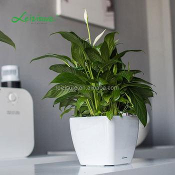 Flower Pots Ceramic Indoor Plant