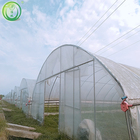 Vegetable Seeds Greenhouse