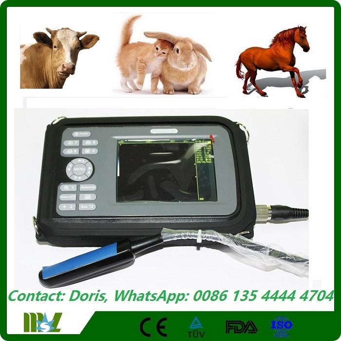 Equine pregnancy test