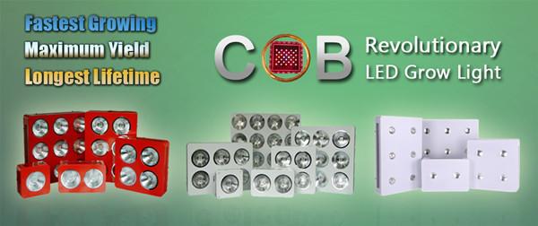 2 Years Warranty High Lumen High Intensity Cob Chip Apollo-6 1200w ...