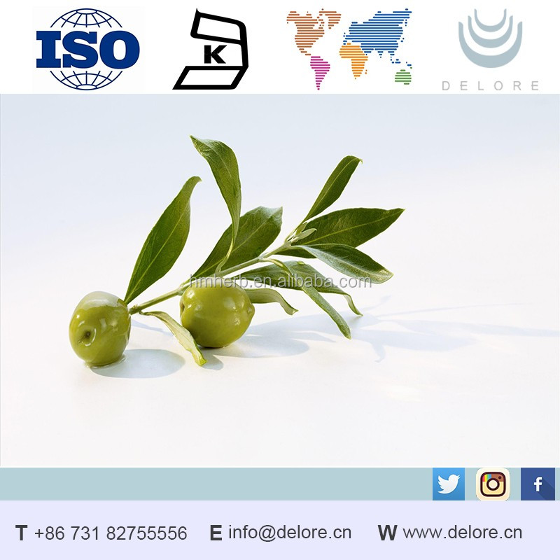 Olive leaf extract in bulk Oleuropein 40%