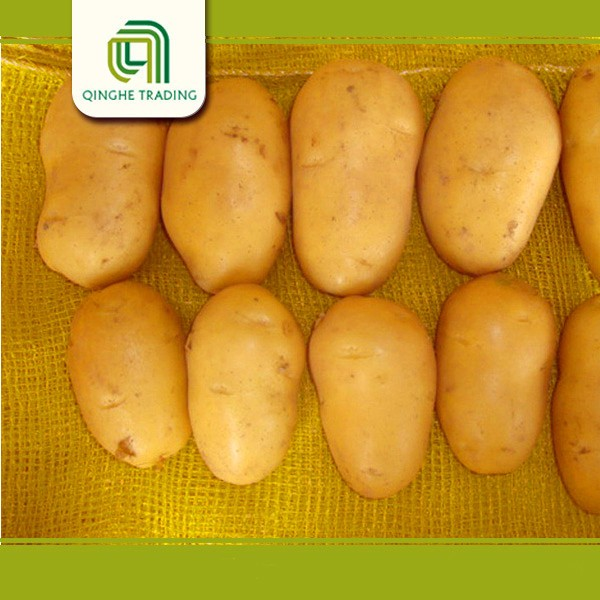 fresh potato importers fresh potato in dubai