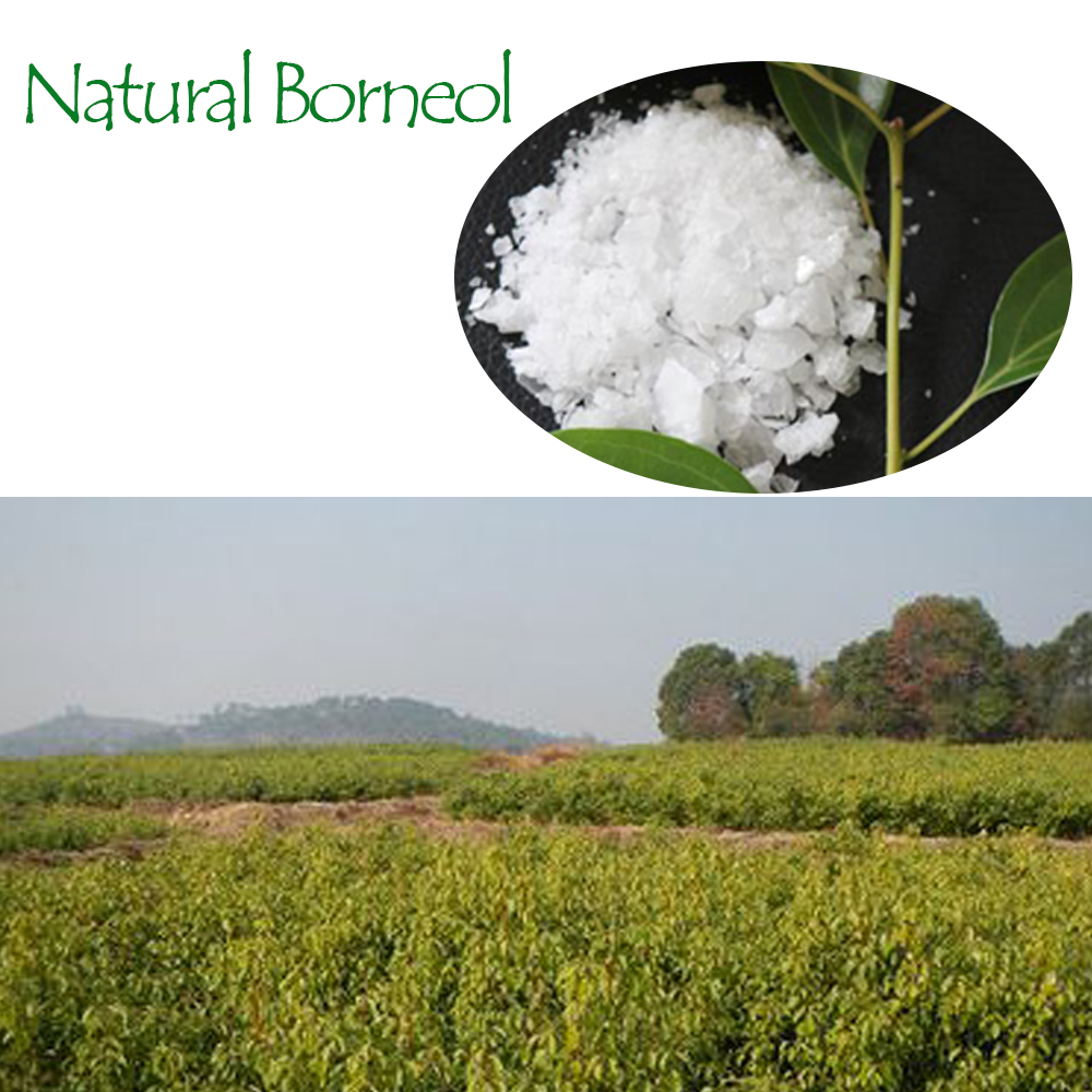 Hot Selling Synthetic Borneol Powder with Best Price Quality Assurance from Pharmacy Material Factory