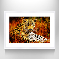African Leopards Printing Painting Pictures Wall Art Home Decor Prints,Animal Mural Photo Art,Framed and Stretched,Ready to Hang
